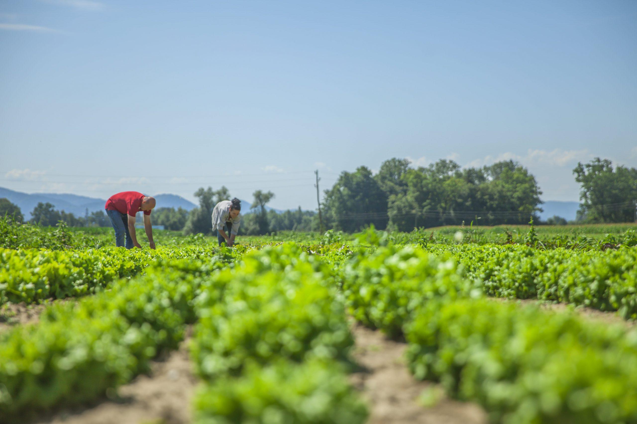 UPA Granada critica que el registro salarial por sexos sea válido para el sector agrario, donde los salarios van en función de la categoría profesional, no del género