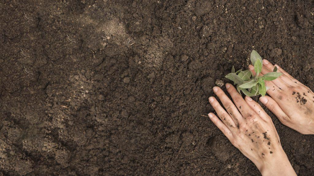 manos sobre tierra plantando una planta